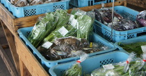 FoodAndAgricultureThumbnailType2